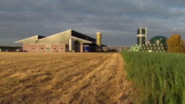 В Англии построят завод по переработке навоза в биогаз