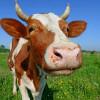 Ученые: если мы не откажемся от мяса, изменение климата неибежно