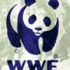 WWF напомнил о себе Арктикой.