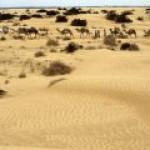 Repsol обнаружила в Ливии высококачественную нефть