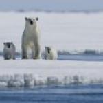 Примерно треть всей арктической инфраструктуры в ближайшее время может быть уничтожена