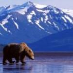 Сможет ли открытие Caelus спасти Аляску от банкротства?