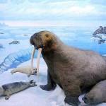 «Газпромнефть-Сахалин» будет изучать в Арктике экосистемы