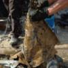 Россия нарастила ежесуточную добычу нефти и газоконденсата