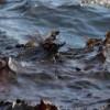 Аэрощуп сибирских ученых поможет выявлять донные нефтяные отложения