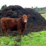 В Великобритании автобус, работающий на коровьем навозе, побил рекорд скорости