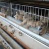 Под Петербургом построят биогазовую электростанцию на птичьем помете