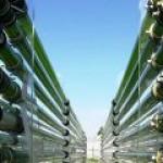 В США решили развивать производство нефти из водорослей