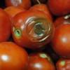 Ученые из США решают задачу получения энергии из тухлых помидоров