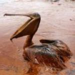 В Австралии изобрели новый метод борьбы с последствиями разлива нефти