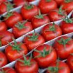 В Оренбурге научились производить биогаз из турецких помидоров