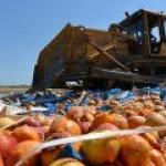 В Оренбургской области производят биотопливо из санкционных продуктов