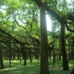 Новые леса помогут РФ выйти на биржу углеродных кредитов