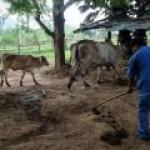 В отдаленной деревне Таиланда научились жить без классических источников энергии