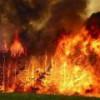 Лесные пожары вплотную подошли к нефтепроводу ВСТО