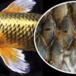Рыбные отходы – как сырье альтернативной энергетики
