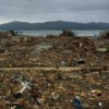 В Японии из зараженного радиацией леса хотят вырабатывать электроэнергию