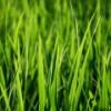В Великобритании хотят обогревать жилые дома травой
