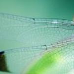 В Сорбонне создали ветротурбину со стрекозиными крыльями
