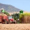 Бразильский сахарный тростник может спасти климат нашей планеты