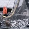 В России из-за роста цен на топливо серьезно подорожает рыба