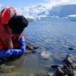 Морская фауна под угрозой из-за падения уровня кислорода в океане