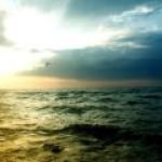 CO2 начал уничтожать фауну Тихого океана