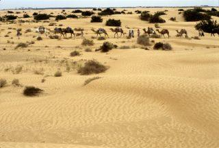 Saxara Sahara pesok