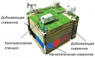 Bajenovskaia svita
