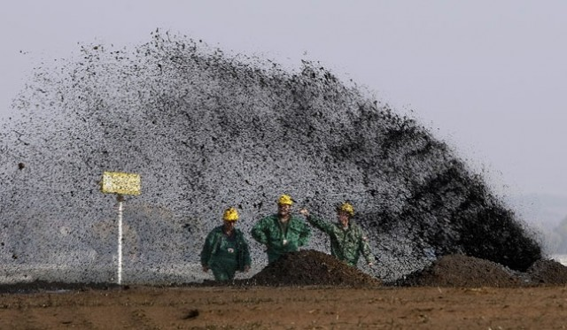 Surgut neft Oil
