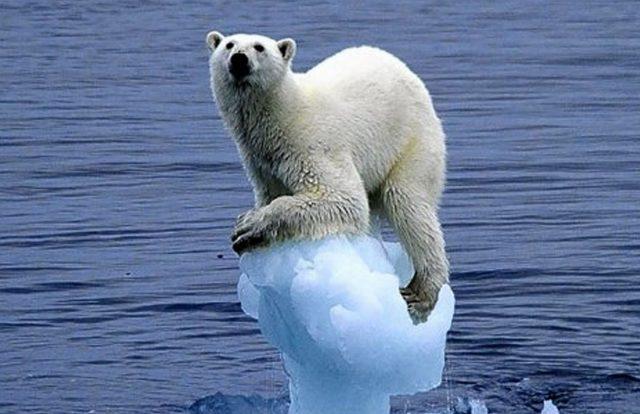 Medved Poteplenie