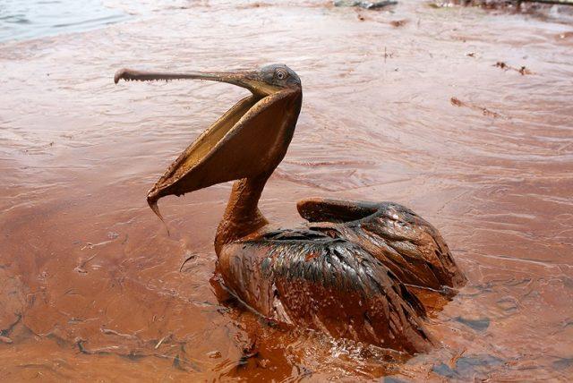 Oil Ekologia