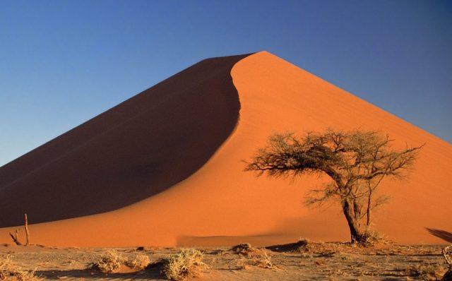 pustynja
