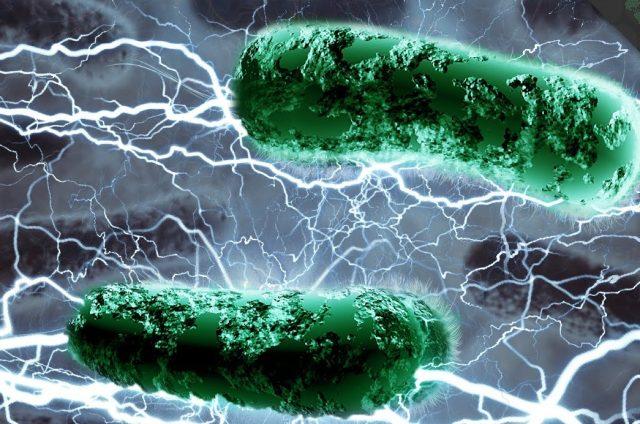 bakteria_energia